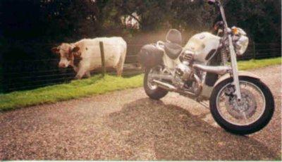 Heilige koe.jpg