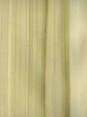 Yellow Poplar hout kleur.jpg